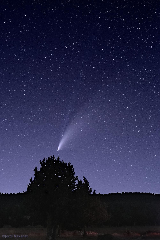 Cometa C/2020 F3 NEOWISE gran campo sobre arbol el 18/07/20