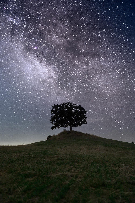 Encina solitaria en horizonte y Vía Láctea