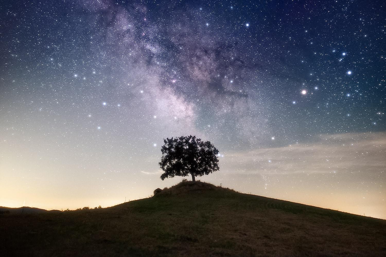 Encina solitaria en horizonte y Vía Láctea, gran campo
